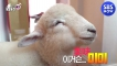 [TV 동물농장] Ep.975 예고 맛 좀 아는 양이 있다!? / Animal Farm Preview  SBS NOW